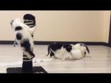 Лучшее видео с котятами что я снимал) 3 в одном, много драйва)