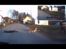 Hilarious - Dog drads kid across a road