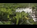 Обитатели Амазонки