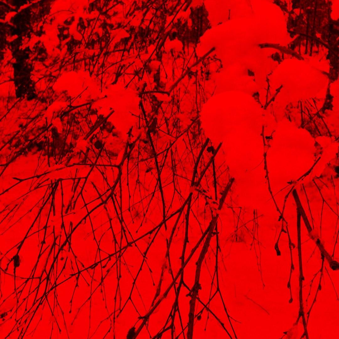 фото из альбома Тамары Кауровой №1