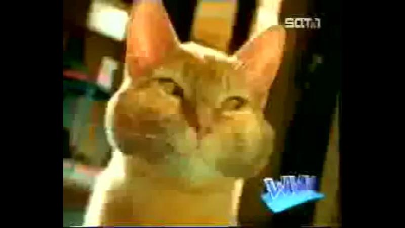 Немецкая реклама кошачьего туалета Уха ха ха всем смотреть угар DDD 360