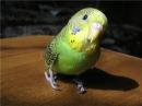 Попугаи светятся в УФ лучах Веселая наука серия 13 Документальные фильмы National Geographic
