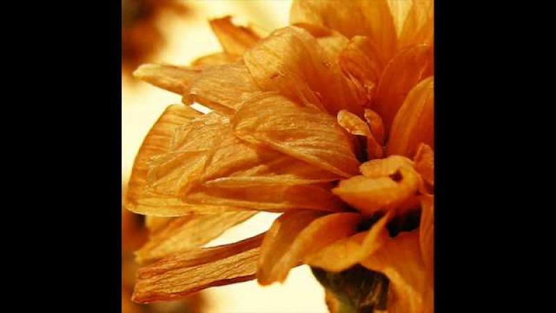 Отцвели хризантемы Валенти́на Пономарёва