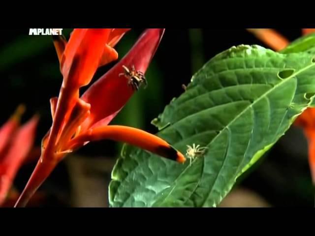 Войны жуков гигантов Monster bug wars Инстинкт убийства
