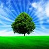 Исцеление Родового Дерева