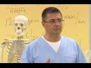 Таблетки для мозга боль в бедре онкоиммунология Доктор Мясников