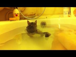 Кот любящий купаться! Большая редкость)
