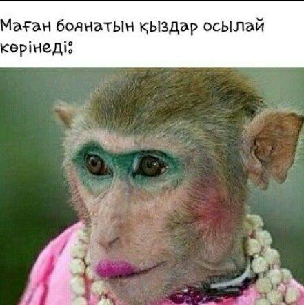 того, картинка с обезьяной накрасилась обладает особенностью
