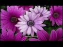красота распускающихся цветов