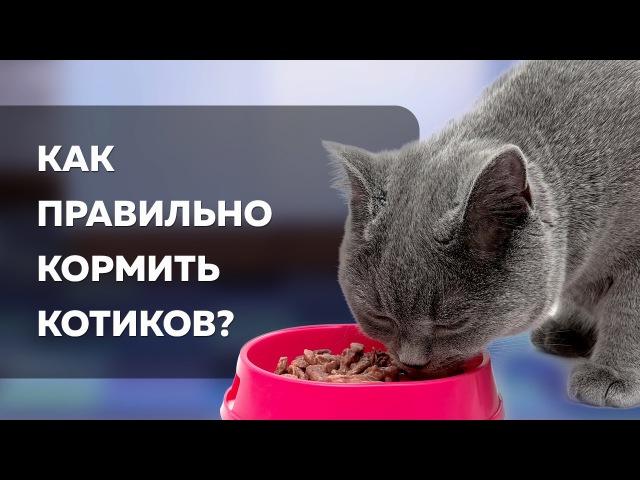 Кот Похудел Как Правильно Кормить.