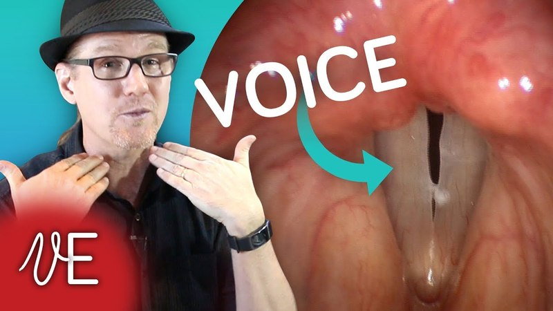 How do VOCAL CORDS work for SPEECH and SINGING DrDan 🎤