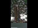 Honolulu parde