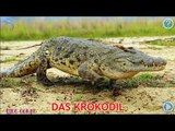 German- Name and sound of agricultural and Natural animal - Kids Learning - German