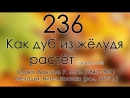 236_Как дуб из жёлудя растёт
