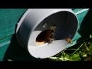 Записки пчеловода.  № 26. Макро-наблюдение за летком улья № 4 от 11.08.18 г.  Отсутствие красноречия, слова-паразиты, частые пов