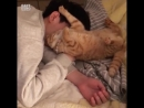 Котик попытался разбудить хозяина