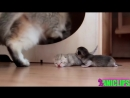 MOM Cat looking out for kittens safety