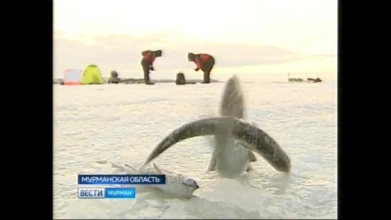Мурманская гуBEARния - ГТРК