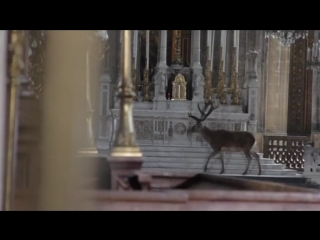 a deer wanders quietly in a church in france