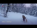 Экспедиция на собачьих упряжках впервые прошла по перевалу Дятлова (от 15.03.2018)