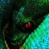 Змеи, ящерицы. Terratoria.