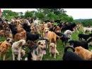 Territorio de Zaguates Land of The Strays Dog Rescue Ranch Sanctuary in Costa Rica