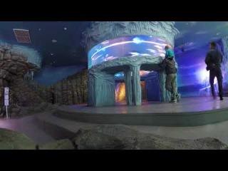 Silverman Sound Studios   Christmas Spirit  Воронежский Океанариум