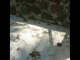 """Евгений Якубович on Instagram: """"Охота на краба часть 1. Вы просто посмотрите какие они смешные . #дом2 #тнт #лучшее #сейшелы"""""""