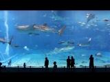 8 000 000 литров воды, один из самый больших аквариумов в мире