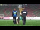 Horax vom Wolfsheim - SV Bundessiegerpr
