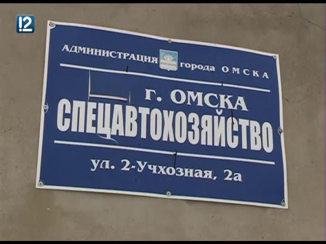 Омские власти ищут 60 млн рублей на содержание бездомных собак