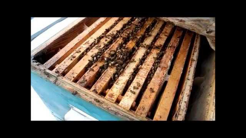 Зимовка пчёл на сетчатом дне 20.01.18г.
