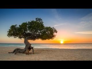 The Locals Travel Guide to Aruba