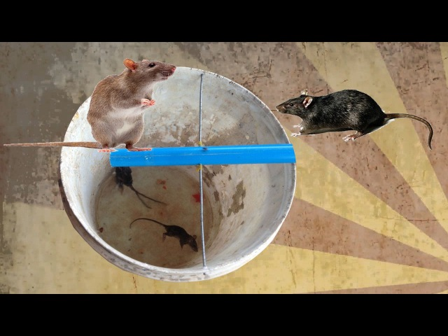 Rat Trap Homemade in Cambodia - Amazing Catch Rat By Water Traps
