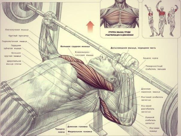 Как накачать грудные мышцы в домашних условиях парням 510
