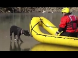 Спасение собаки с тонкого льда