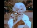 Marilyn Monroe and Tippy (Jeff the dog)