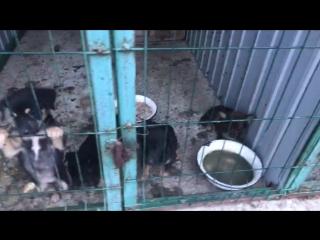 Как в Херсоне относятся к собакам на 5 млн. грн. в год... Люди, это жопа... Это даже не геноцид это ад!!!