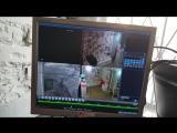 Попытка ограбления Секс-шопа в Барнауле