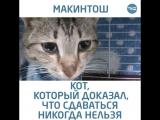 Кошачья история со счастливым концом