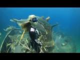 Отважная девушка плавает среди акул