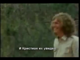 Лев Кристиан.История о настоящей Любви и Дружбе дикого зверя и человека
