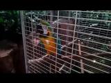 22..12.2017. В океанариуме. Попугай оказался говорящим.