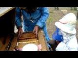 Юный пчеловод. Ребёнок помогает с пчелами.