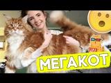 Самый большой котик в мире!