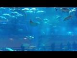 Самый большой аквариум Дубаи