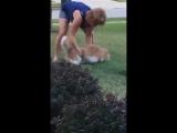 Жирный кот убегает от хозяйки (на это можно смотреть вечно)