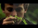 Walden Trailer