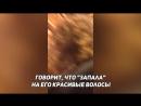 Пуйолю дали по лицу резиновым членом в Москве