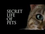 Тайная жизнь домашних питомцев 8 серия  Secret life of pets